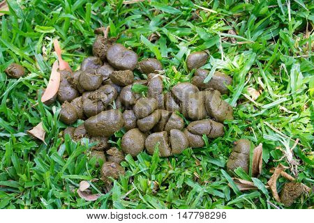 A pile of fresh horse manure on green grass.