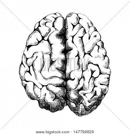 Hand drawn human brain - top view