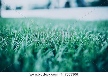Green Grass. Natural Background Texture