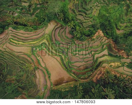 Bird's eye view of beautiful rice paddy terraced fields