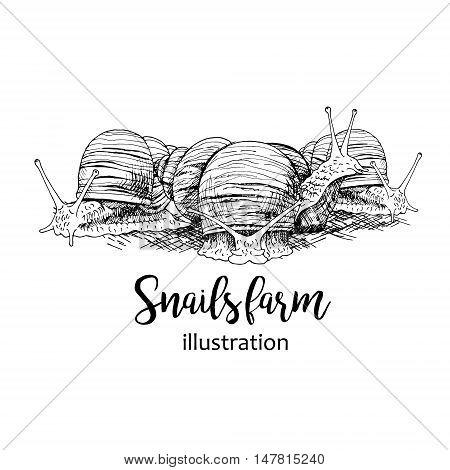 Hand drawn set of snails with lettering. Black and white vector sketch. Image for for snails farm. Doodle line illustration with animals.