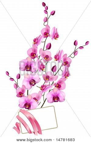 Bunch of pink orchids