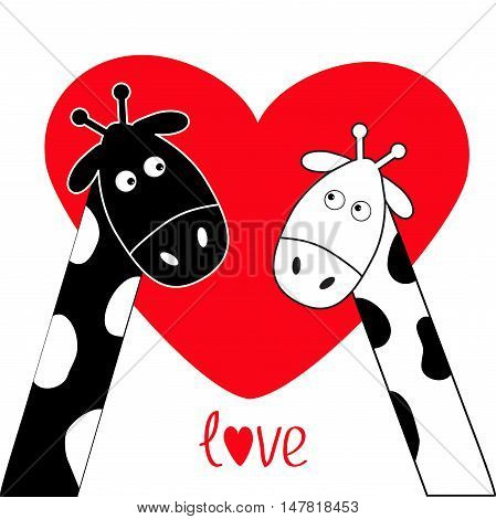 Cute cartoon black white giraffe boy and girl Big red heart. Camelopard couple on date. Funny character set. Long neck. . Happy family. Word Love Greeting card. Flat design. Isolated. Vector