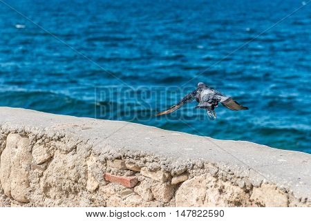 Flying white bird on blue sea water
