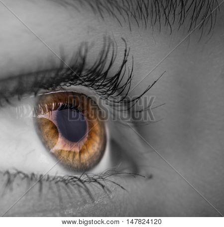Woman eye with long eyelashes.