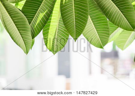 Green leafs in blurred bright sunlight background.