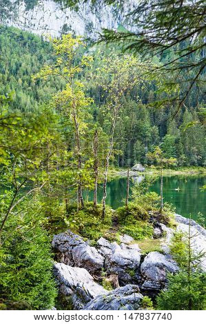 Scenic coast of Vorderer Gosausee lake Salzkammergut Austria. Vertical composition selective focus