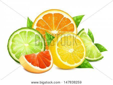Fresh citrus fruits with leaves. Fully editable handmade mesh. Vector illustration.