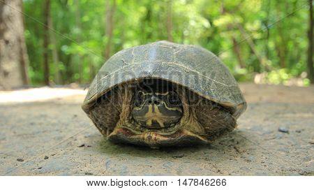 turtles Turtles on the treebeautiful turtles;turtle asia
