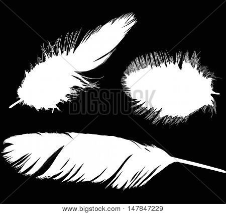 illustration with three white feathers isolated on black background
