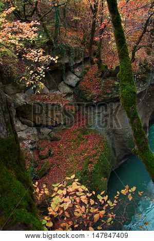 Autumn landscape of rock overgrown with trees moss and ivy in red leaves and flowing river