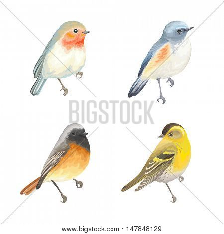 Collection of beautiful birds Robin, Himalayan Bluetail, Redstart and Siskin. Vector illustration birds for your design.