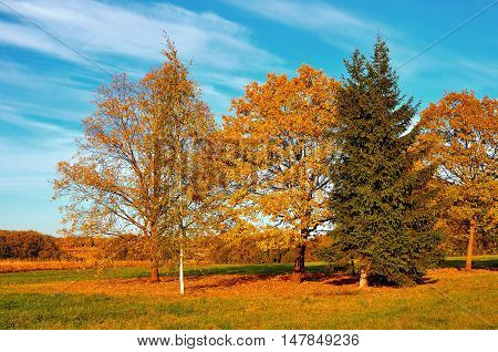 Bright autumn field landscape. Autumn nature landscape-yellowed trees in autumn field in autumn sunny weather. Picturesque autumn landscape view of autumn nature. Soft focus. Autumn nature in sunlight