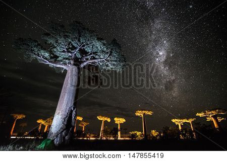 Starry sky and baobab trees of the island of Madagascar. High level of noise