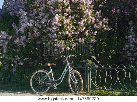 Nice and beautiful bicycle near the flowers tree in park summer