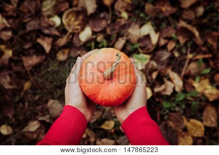 Hand holding pumpkin on autumn fall leaves