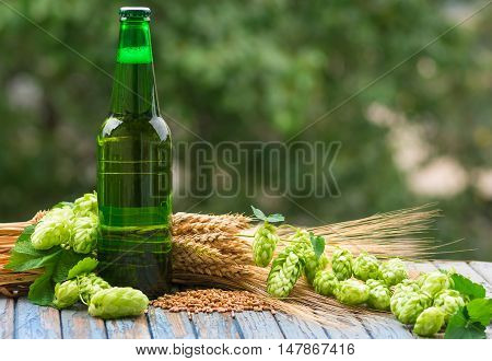 Green bottle of beer, hops, malt, barley ears standing on an old table on natural background