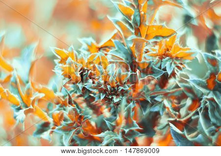 floral background of leaves and thorny branches, bright orange and blue color