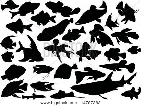 fish silhouettes collection isolated on white background
