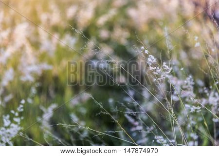 Wild grass that is backlit by the sun