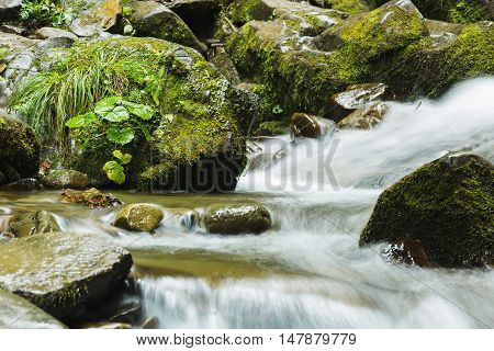 Fast Stream In Forest