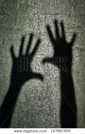 Shadow of two hands on chicken beech tree