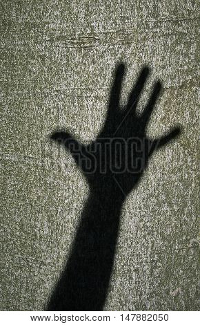 Shadow of one hand on chicken beech tree
