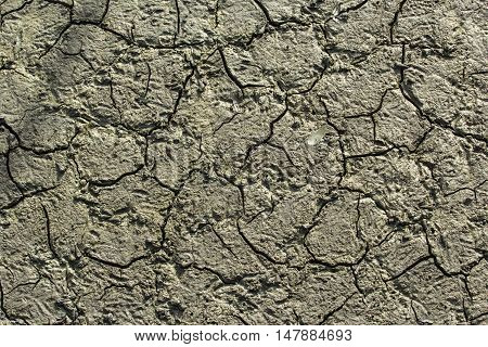 texture of mud in the mangrove forest