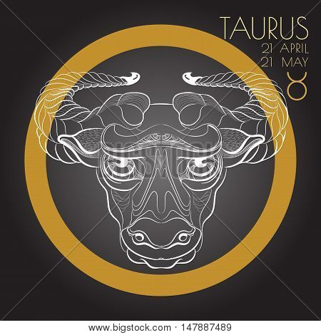Hand drawn line art of decorative zodiac sign Taurus on black background. Horoscope vintage card in zentangle style.