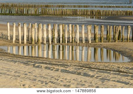 Rows of weathered wooden groynes on the beach of Zoutelande in Netherlands
