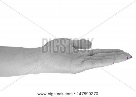 Open hand holding something adult woman's skin magenta manicure. Isolated on white background.