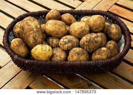 Wicker basket full of freshly dug potatoes standing on a table with wooden planks. Poland september. Close horizontal view.