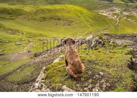 Dog In A Mountains