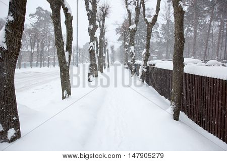 Snowy foot path in an wood alley