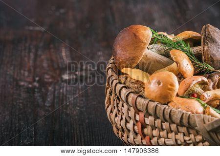 Fresh bovines mushrooms in the wicker busket on the dark wood surface