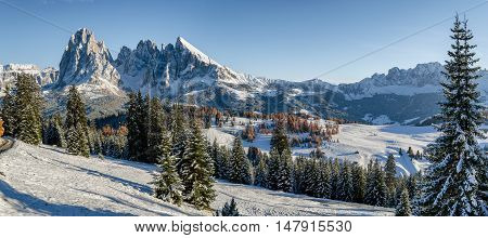 Panorama image of the Seiser Alm or Alpe di Siusi a high altitude alpine meadow in the Dolomites with Langkofel and Plattkofel mountains in the background and fir and larch trees in the foreground under a layer of snow in winter in South Tyrol Italy.