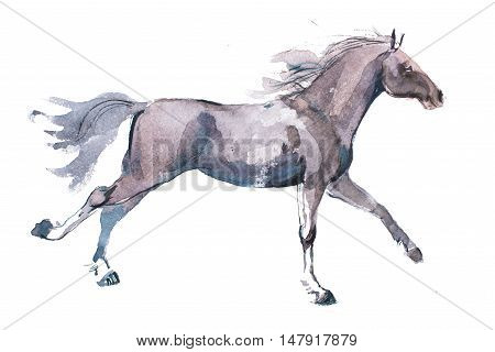 watercolor drawing of jogging horse, young mustang doing dogtrot aquarelle painting.
