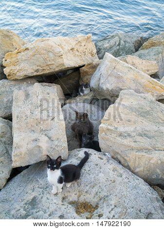 litter of wild kittens in the rocks