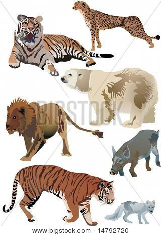collection of animals inclusive polar fox, lion, polar bear, wild boar, cheetah and tigers