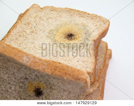 Mold on bread. (on a white background)