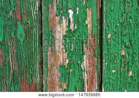 Picture from green weathered wood in detail