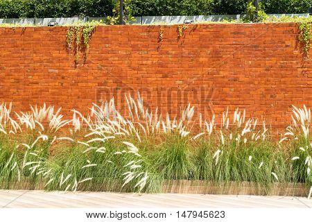 Background of red brick wall with Cogon grass and Ant Plant infront in sunlight blocks of stone-work texture colorful horizontal architecture