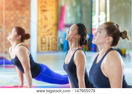 Fitness asian female group doing cobra pose in row at the yoga class. selective focus