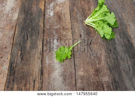 chinese cabbage organic vegetable on  wooden table. Insect eat hole in the leaf. Top view  and copy space background.