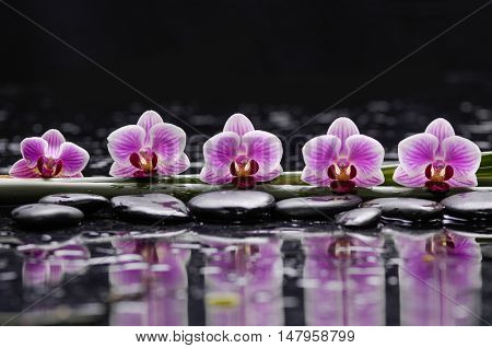 still life with five orchid with long leaf and black stones