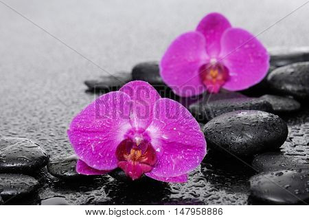 Two red orchid with black stones-wet background