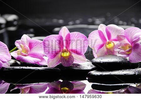 still life with set of orchid and black stones