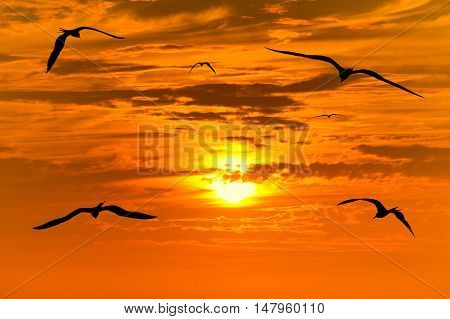 Sunset birds flying is flock of birds flying into the colorful surreal sunset with a white hot glowing sun guiding the way.