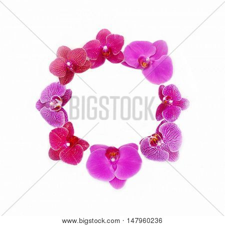 Set of red with pink fresh orchids isolated