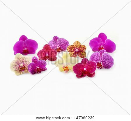 Set of fresh orchids isolated-white background